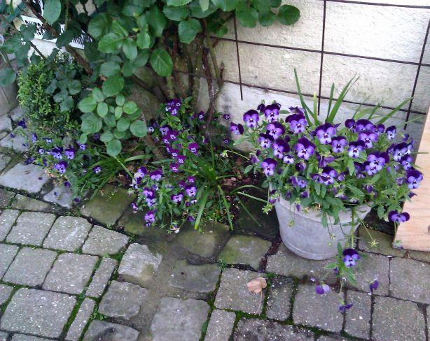 Ardennentour - Blumen
