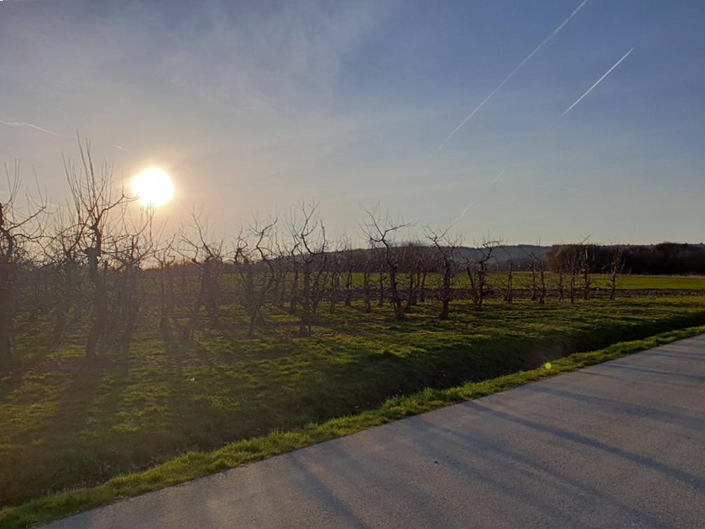 Spaziergang in der Abendsonne