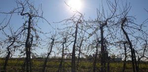 Obstbäume im Gegenlicht